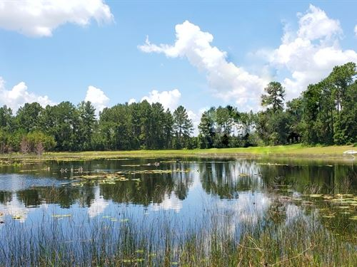 6 Acres, Waterfront In Moss Bluff : Ocklawaha : Marion County : Florida