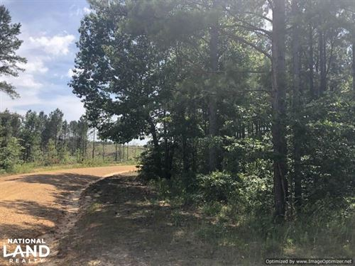 40 Acre Ball Rd, Hunting & Timber : Louisville : Winston County : Mississippi