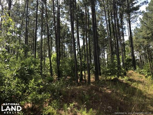 41 Acres Ball Rd, Hunting & Timber : Louisville : Winston County : Mississippi