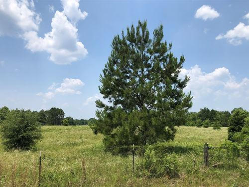 5 Fully Fenced Acres Paved : Fort White : Columbia County : Florida