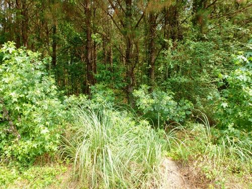 Oversized Residential Lot : Wallace : Duplin County : North Carolina