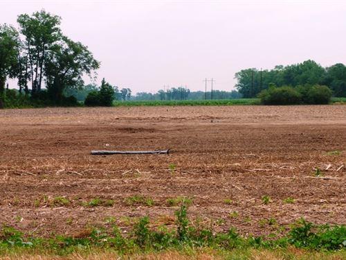 Combination Farm Land Woods : Beulaville : Duplin County : North Carolina
