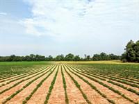 Blakely Hilltop Farm 40 Ac Farm : Blakely : Early County : Georgia