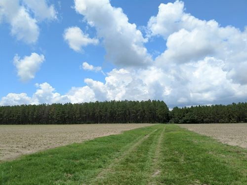 40Ac Next To Goethe State Forest : Inglis : Levy County : Florida
