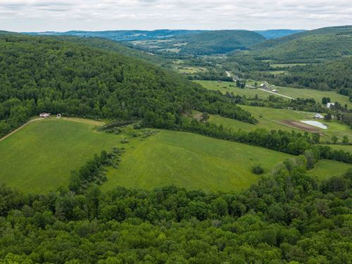 Hunting Preserve, Hundreds Of Acres : Hornell : Steuben County : New York