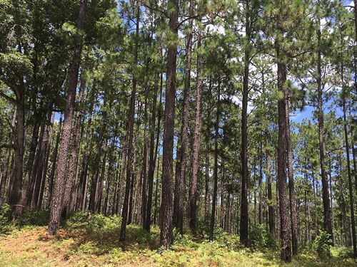 1.37 Acres In Gilmer, Tx : Gilmer : Upshur County : Texas