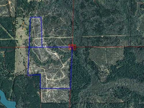Two Parcels Totaling 98 Acres : Clayton : Barbour County : Alabama