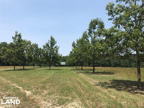 Thorntree Farms : Salters : Williamsburg County : South Carolina