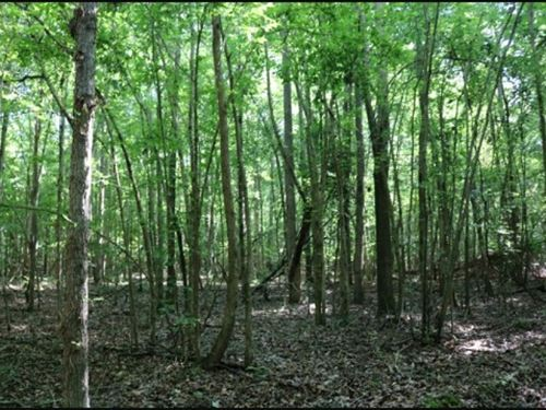 22.6 Acres In Newton County In Cone : Conehatta : Newton County : Mississippi