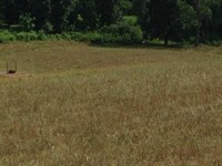 50 Acres Gorgeous Farm Mountain : Rogersville : Hawkins County : Tennessee