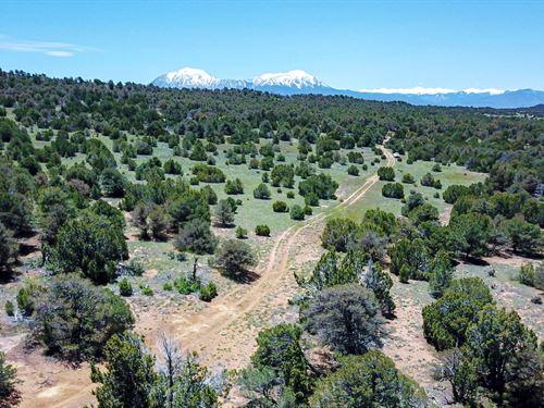 Wooded Lot Bordering State Park : Walsenburg : Huerfano County : Colorado