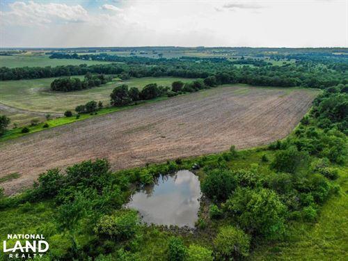 Kincaid Cattle, Farm, Hunt : Kincaid : Anderson County : Kansas