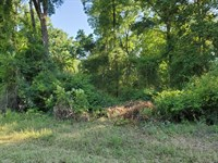 Secluded Acreage Close to Town : Chiefland : Levy County : Florida