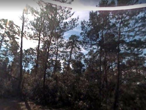 Marion County, Fl $52,000 Neg : Ocala : Marion County : Florida