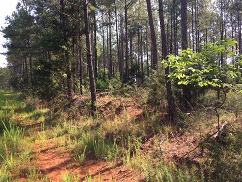 Old Dan Tucker Timber Tract : Elberton : Elbert County : Georgia