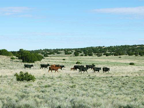 74 Acre Northern AZ Ranch $308/Mo : Saint Johns : Apache County : Arizona
