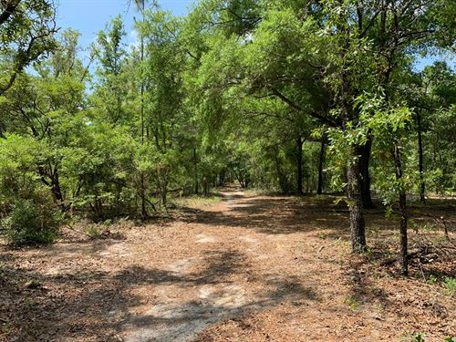 80 Acres Wooded Land Gilchrist : Bell : Gilchrist County : Florida
