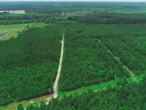 Simpson Creek 96 / 378 Acres : Loris : Horry County : South Carolina