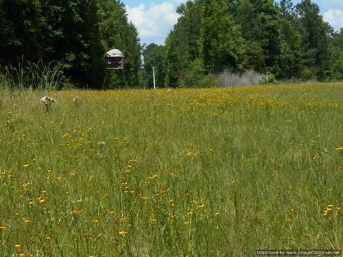 Beautiful Property : Petal : Forrest County : Mississippi