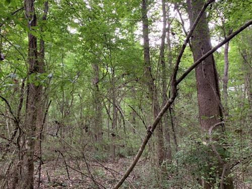 192 Acres In Holmes County In West : West : Holmes County : Mississippi
