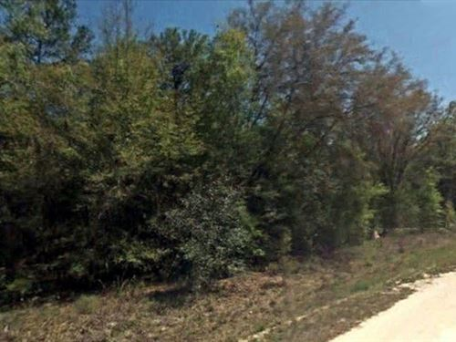 .18 Acre Great Place To Relax : Fort McCoy : Marion County : Florida