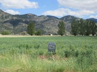 Corner Lot, New Pine Creek, $190/Mo : New Pine Creek : Modoc County : California