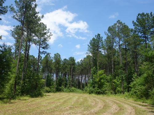 82.79 Acres, Richland County, Sc : Blythewood : Richland County : South Carolina