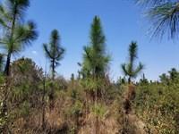 State Line Tract : Fruitdale : Washington County : Alabama