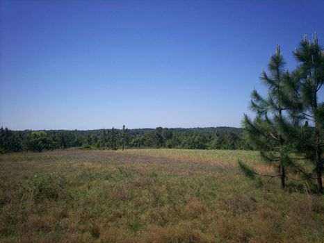 409 Acres of Hardwoods w/ Pine : Highland Home : Crenshaw County : Alabama