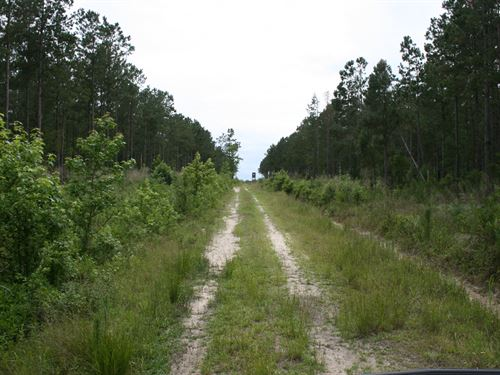 268.50 Acres in Beulaville, NC : Beulaville : Onslow County : North Carolina