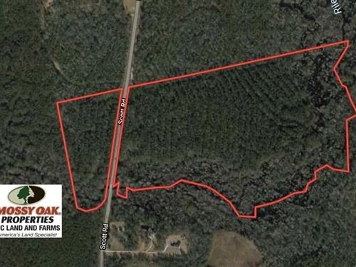 Under Contract, 59 Acres of Hunti : Rocky Point : Pender County : North Carolina