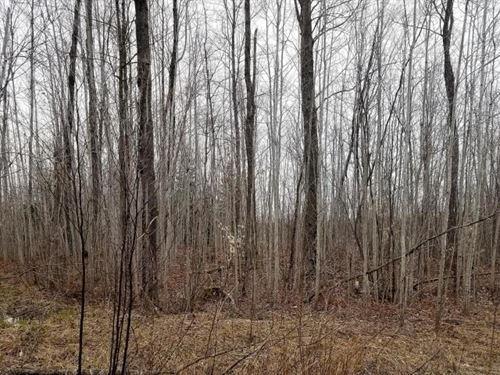 Hunting Property West Alpena County : Lachine : Alpena County : Michigan