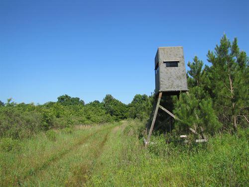 Walesheba Creek, Yazoo County : Bentonia : Yazoo County : Mississippi