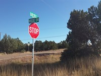 Nice Treed Lot-White Mountain Lake : White Mountain Lake : Navajo County : Arizona