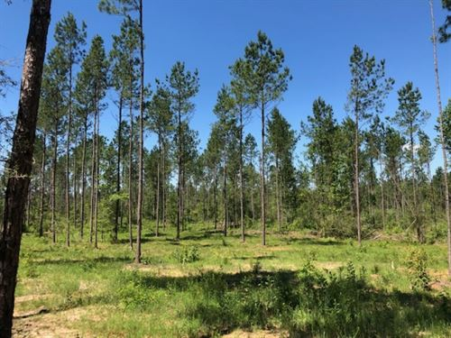 3.47 Acres In Npsd : Summit : Pike County : Mississippi
