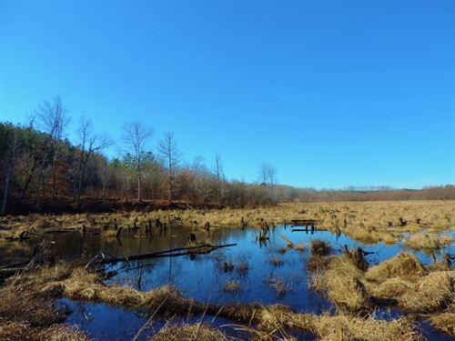 Waterfowl Tract : Maxeys : Oglethorpe County : Georgia