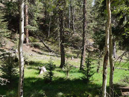Vacant Land in Divide Close to Town : Divide : Teller County : Colorado