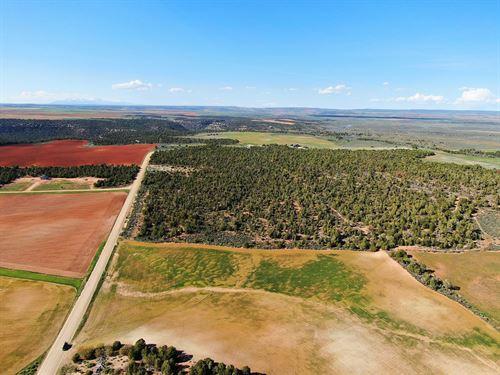 Southern Utah Hunting Property, Has : Monticello : San Juan County : Utah