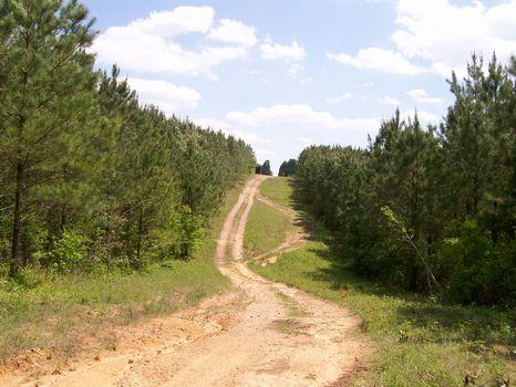 284 Acs Managed Timber near Bmghm. : Jemison : Chilton County : Alabama