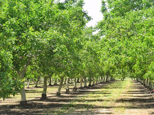 Northern CA Income Producing Walnut : Madison : Yolo County : California