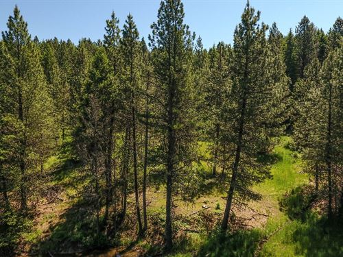 25 Acre Bulding/Recreational Acrage : Kamiah : Idaho County : Idaho