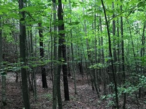 5.29+/- Acres Unrestricted, Wooded : Tracy City : Grundy County : Tennessee
