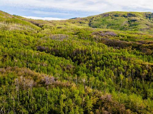 Legacy Mountain Property Creek : Cedaredge : Delta County : Colorado