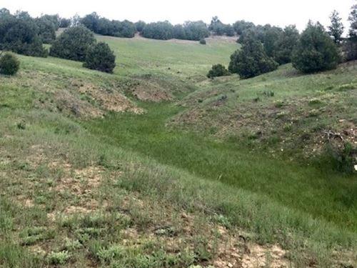 Beautiful 50 Acres Land West Chama : Chama : Rio Arriba County : New Mexico