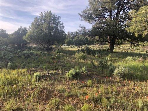 Residential Land Heron Lake Laguna : Rutheron : Rio Arriba County : New Mexico