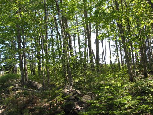 Wooded Lot in Northfield, Maine : Northfield : Washington County : Maine