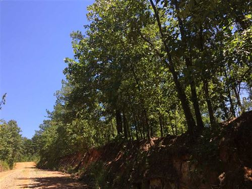 Secluded Property With Great Hunti : Ellaville : Schley County : Georgia