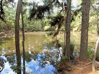Large Wooded Ranchette Homesite, 3 : Richards : Montgomery County : Texas