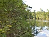 Escambia River River : Jay : Santa Rosa County : Florida