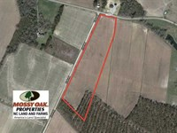 Reduced, 13 Acre Farm For Sale : Tyner : Chowan County : North Carolina